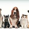 Pet Food, Holistic Pet Food Las Vegas