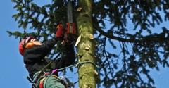 Total Tree Service - Kalamazoo, MI