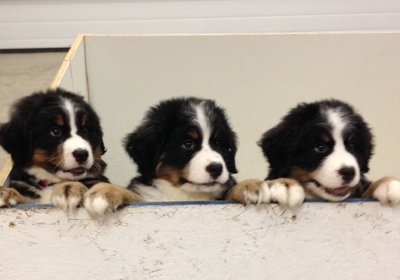Windy Mountain Kennels 87 Hulett Rd, Granville, NY 12832 - YP com