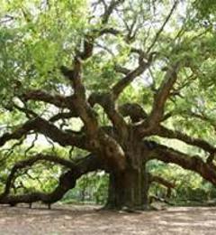 Treescape Inc - Charlotte, NC
