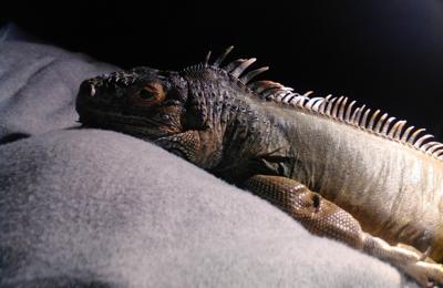 Reptile Room - Hayward, CA