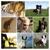 Creature Comforts Animal Care, LLC