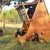 Texas Ranch Hen Houses Chicken Coop Fence Posts