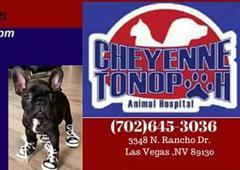 Cheyenne Tonopah Animal Hospital - Las Vegas, NV. Call us for more information 7026453035 or come by and meet us at 3348 N.Rancho Drive, Las Vegas, Nevada 89130