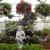 Charvet's Garden Center