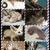 "RexelzL 505x433x9562 ""Finger Monkeys for sale"" """" yorkies for sale"" ""iphones for sale"" capuchins hedgehogs sugar gliders marsupials Sony PlayStation Michael Jordan retro cannabis canabis cameras julia"
