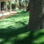 Purchase Green Artificial Grass - Rancho Cordova