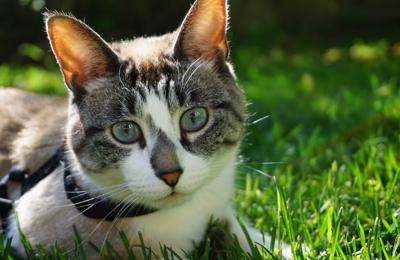 Animal Advocates Veterinary Hospital - Troy, MI