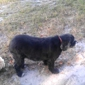 Doggie D'Tails Mobile Dog Grooming - Tavares, FL