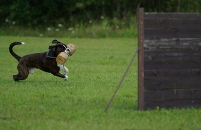 Dog Training Sugar Land, TX - Sugar Land, TX