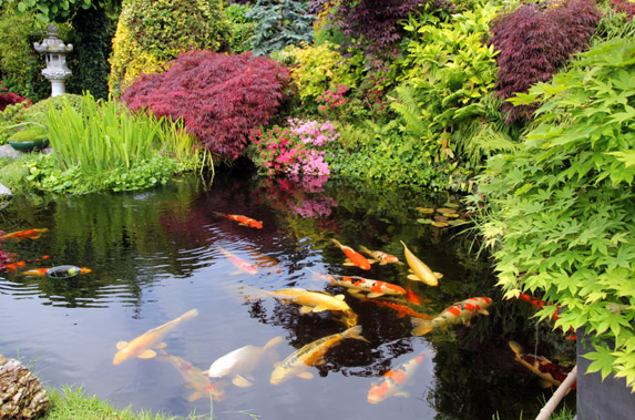 Champion koi ponds 1074 colorado ave port huron mi 48060 for Koi pond maintenance near me