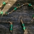 Body Jewels by Nashel - CLOSED