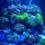 Coral Logic Aquarium