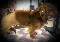 Scissors n Sudzs Pet Salon LLC - Farmington, NM