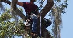 Neon Tree Service - Melbourne Beach, FL