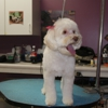 Waggers Professional Pet Salon