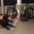 Alpha Academy Of Dog Training By Bob Moorefield