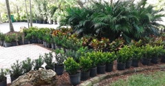 William Landscaping Service - Fort Lauderdale, FL