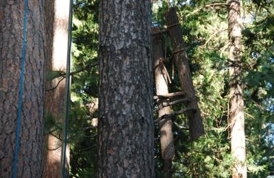 Lone Pine Tree Service