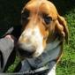 Safe At Home Pet Sitting - Carson City, NV