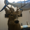 topnotchtaxidermy mobile unit