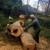 Gomez Trees & Landscaping