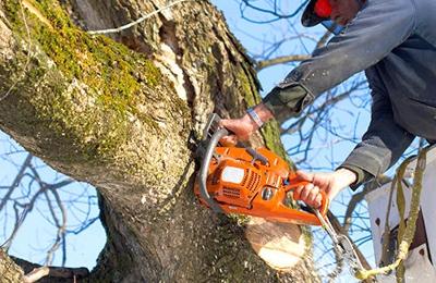 Kegley's Tree Service - Disputanta, VA