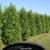 Jireh Trees