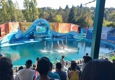 Six Flags Discovery Kingdom - Vallejo, CA. Dolphin show