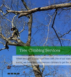 A & L Tree Experts - Madison, CT