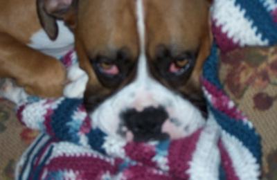 Dog & Cat Clinic - Leavenworth, KS