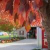 Prairie Sky Orchard - Apple Orchard