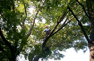 Horton Tree Service - Fort Worth, TX