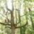 Van Yahres Tree Co.