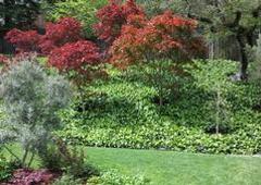 A Plant Scheme - Burlingame, CA