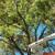Noel's Tree &Lawn service