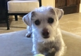 Pacific Coast Pet Care - Carlsbad, CA. Miss Riley Thank you Vernie!����