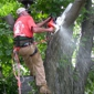Pro Tree Services - Kirtland, OH