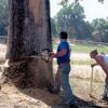 High Sierra Tree Service