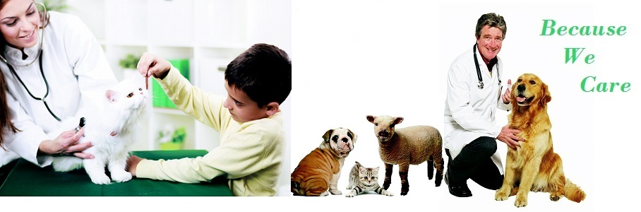 animal clinic, animal rehabilitation