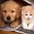 Snow Hill Veterinary Services LLC