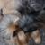 SPCA Albrecht Center for Animal Welfare