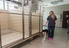Lake Elsinore Animal Hospital - Lake Elsinore, CA
