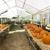 Thomson Garden Shop & Landscaping