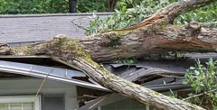 570-380-fallen-tree-on-house_normal[1]