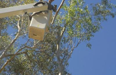 4th Generation Tree - Atascadero, CA