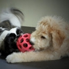 Petropawlis Pet Board & Day Care