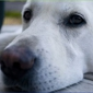 Healthy Pets of Bren-Lor - Grove City, OH