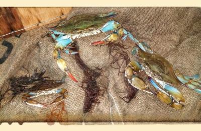 The Crab Stop - Orlando, FL
