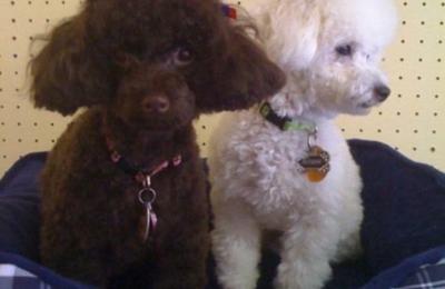 Friend Companion Dog Grooming And Teaching Academy 7239 Fairbanks